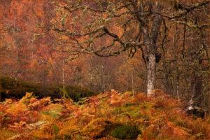 1st=   Autumn in Glen Affric by  Robin Miller